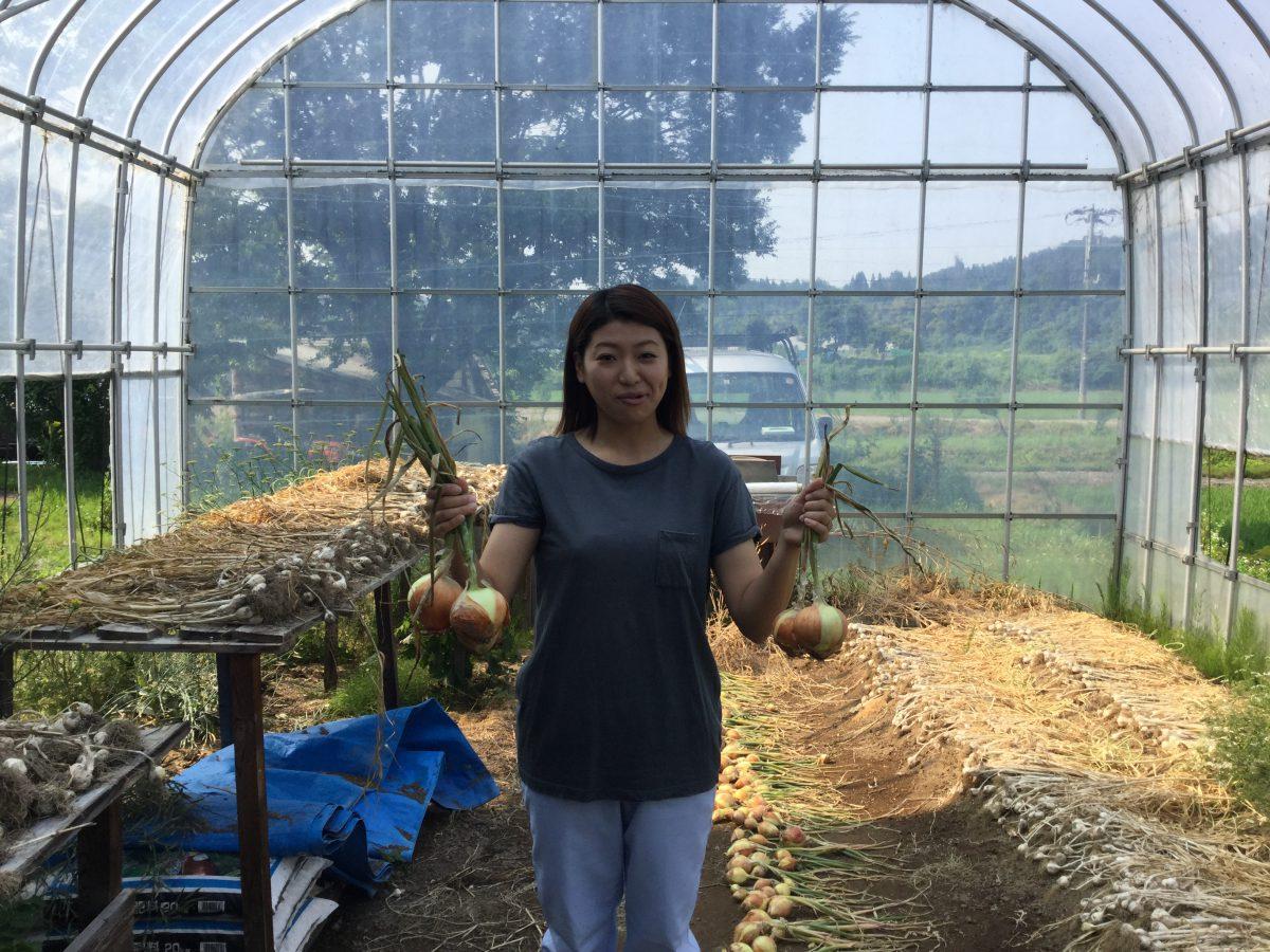 玉ねぎの収穫、始まりました。